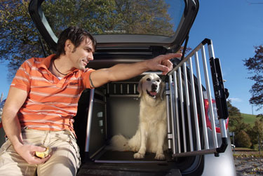 dog-box-auto_375_2.jpg