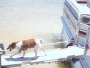 hondenloopplank-boot.jpg