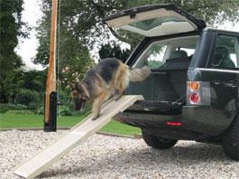 hondenloopplank-petstep.jpg