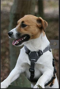 web-master-harness-248.jpg