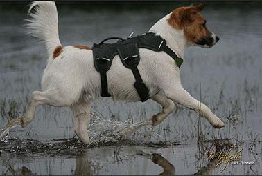 web-master-harness-water-378.jpg