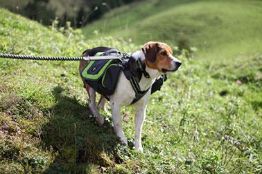 EQDOG Flex Pack hondenrugzak