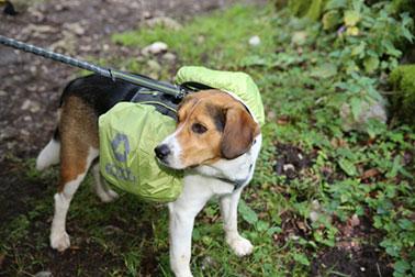 EQDOG Flex Pack hondenrugzak regenhoezen