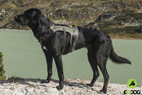 Honden harness Pro EQDOG